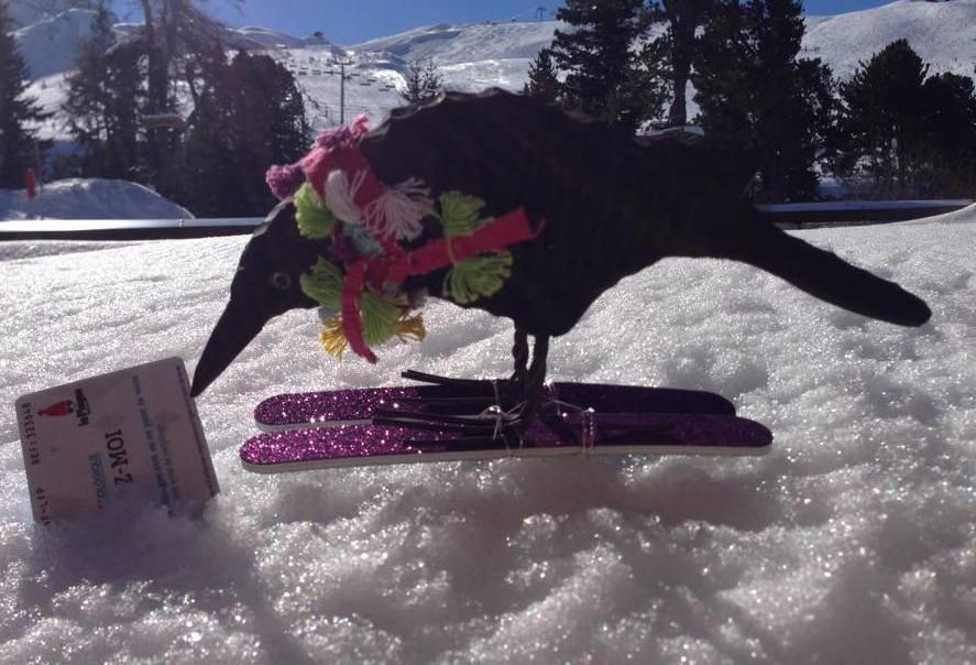 Belton crow goes skiing