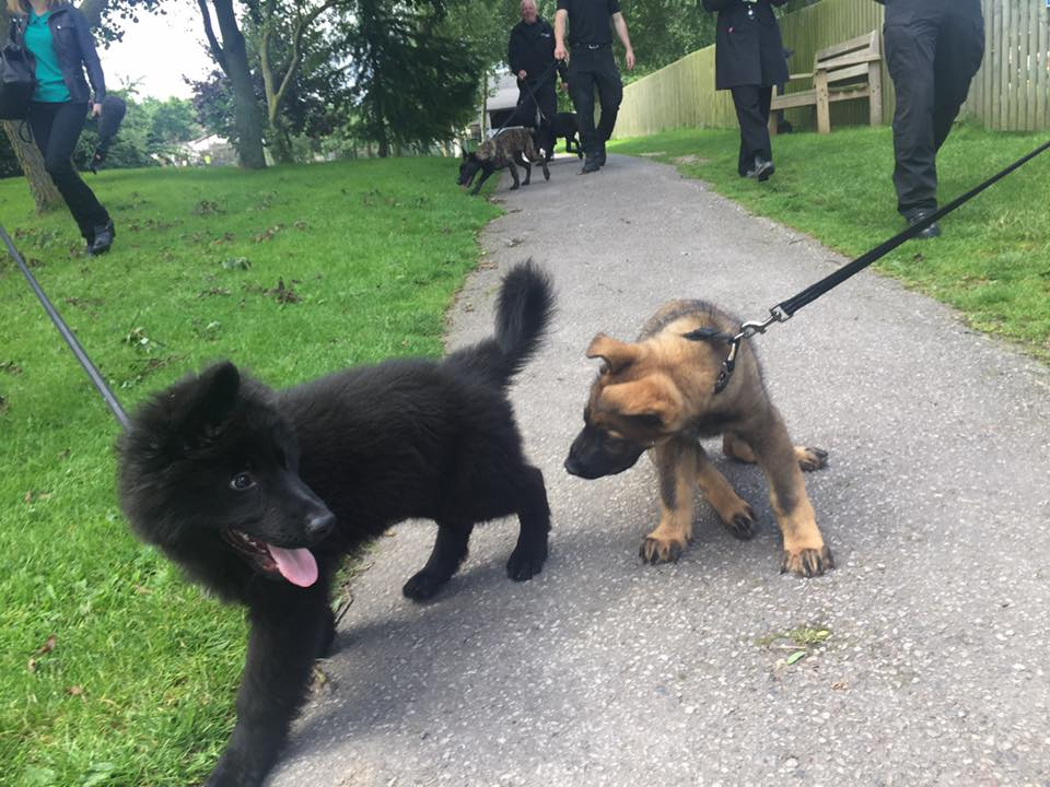 Puppy news 2
